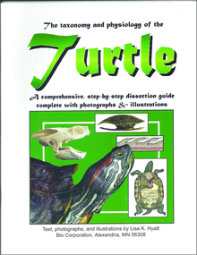 Turtle Dissection Reference Guide