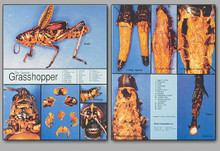 Concise Dissection Chart - Grasshopper