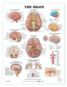 Reference Chart - Brain
