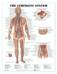 Reference Chart - Lymphatic System