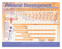 Reference Chart - Prenatal Development