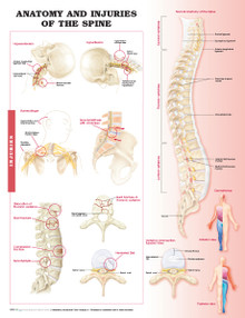 Reference Chart - Anatomy and Injuries of the Spine