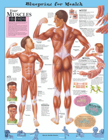 Reference Chart - Elementary Your Muscles