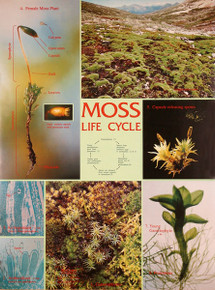 Wall Chart - Moss Life Cycle
