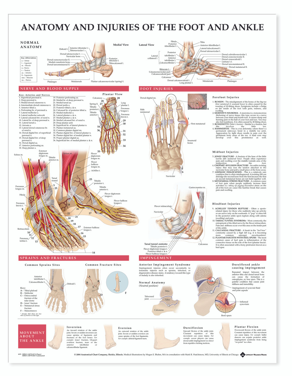Reference Chart Anatomy And Injuries Of The Foot And Ankle