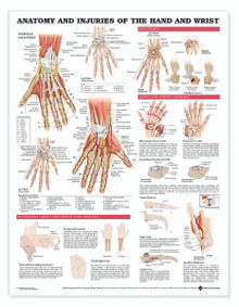 Reference Chart - Anatomy and Injuries of the Hand and Wrist