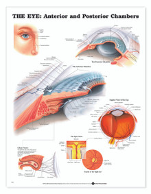 Reference Chart - Eye Anterior & Posterior Chambers