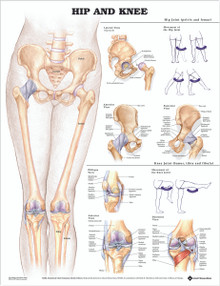 Reference Chart - Hip and Knee