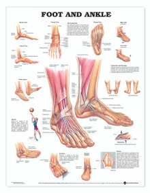 Reference Chart - Foot and Ankle