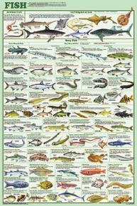 Display Chart - Fish