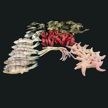 6 Specimen Bulk Kit - Extra Large PAIL