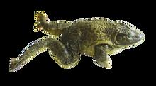 "4"" - 5"" Plain Bullfrog Pail"