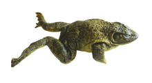 "4"" - 5"" Single Bullfrog Pail"
