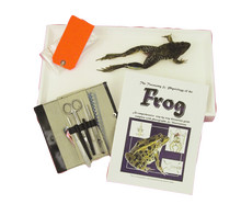Frog-In-A-Box Kit
