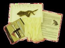 Frog Kit - Intermediate