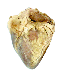 Sheep Heart - Uncut