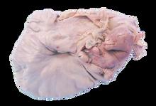 Sheep Uterus - Pregnant