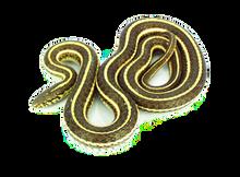 """Live 14""""- 18"""" Garter Snake"""
