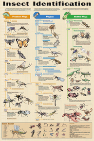Display Chart - Insect Identification
