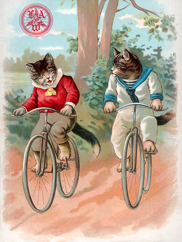 Cats - League of American Wheelmen