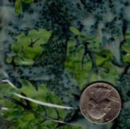 AAAQuilter's Supply Batik Green/Gray Leaf 041