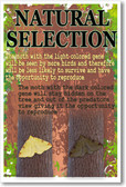 Natural Selection - NEW Classroom Biology Science Poster