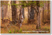 Chital Stag in Nagarhole National Park  - NEW Animal Wildlife Poster