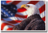 American Patriotic Bald Eagle - Animal Poster