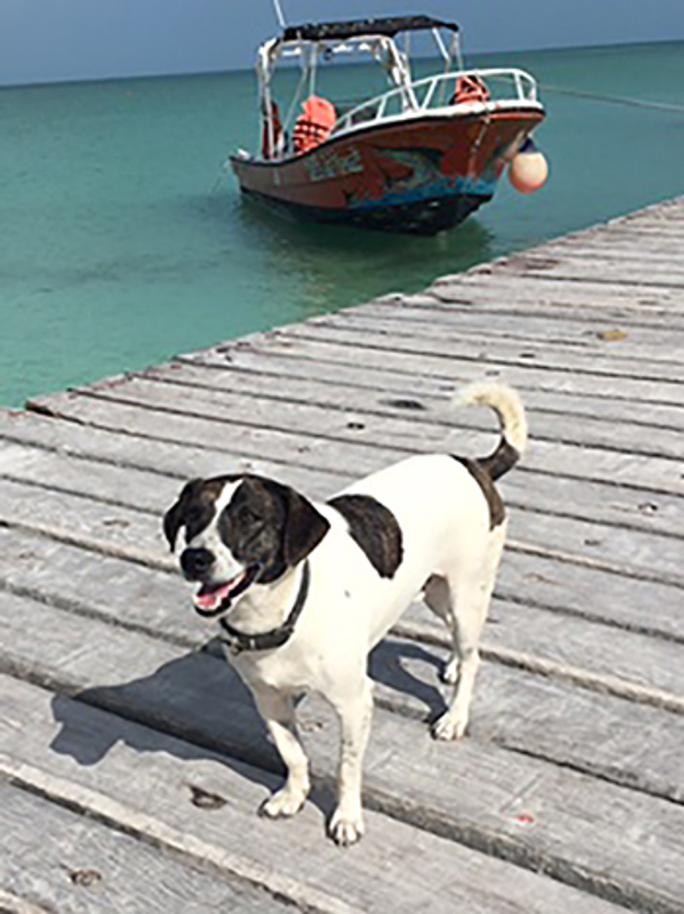 The Dogs of Holbox Island - Is this Where Dogs go to Heaven?