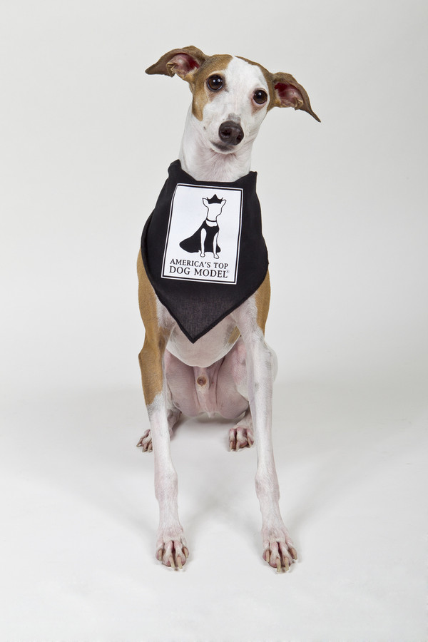 America's Top Dog Model Signature Black Cotton Bandana