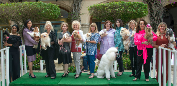 Top Dogs Strut the Runway for Charity