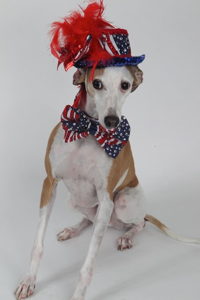 How to Keep Your Dog Calm During Fireworks and Storms