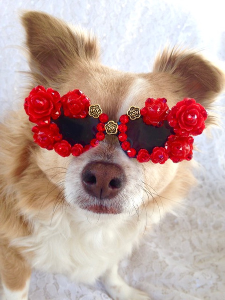 Valentines Day Gifts Your Dog will Love
