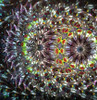 interior image of Kaleidoscope 'The Time Fly' in Bubinga wood by Henry Bergeson