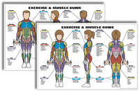 Exercise and Muscle Guide Fitness Chart Kit