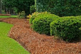 Image result for pine straw
