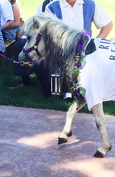 We do it all- even flowers for the wedding pony!