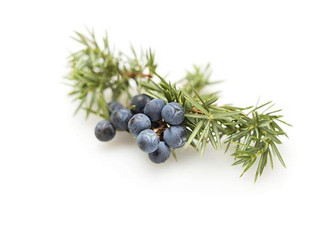Juniper Berry Dark Balsamic