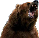 bear-smile.png
