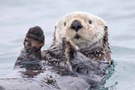 Yesterday I caught a fish thiiis big! - Otter. Alaska by Roman Golubenko