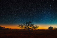 October Tree at Twilight by Matt Anderson