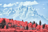 Grand Teton Mountains with Red Forest by Matt Anderson