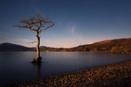 Lone Tree in Loch Lomond Scotland by Karen McDonald