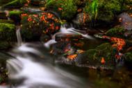 Autumn Melodies by Yavuz Pancareken