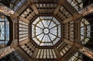 Looking Up by Renate Reichert