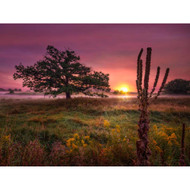 Prairie Tree Sunrise #2 by Matt Anderson