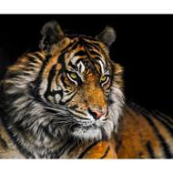 Tiger by Nora De Angelli