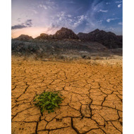 Life in a Dry Land by Khalid Jamal