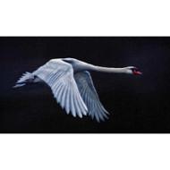 Nights in White Satin by Piet Flour