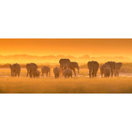 Golden Light with Elephants by David Hua